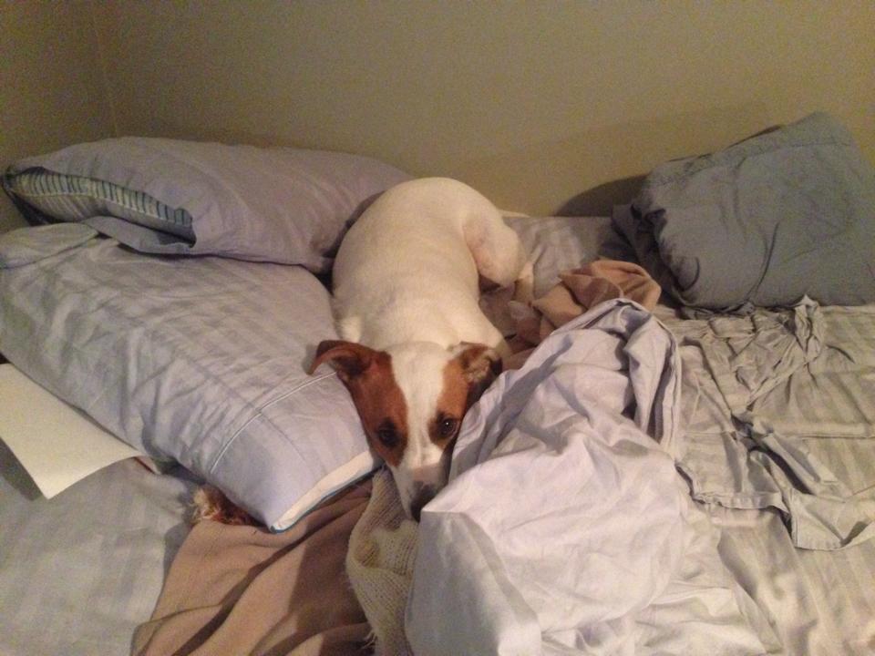 mattiesleeps